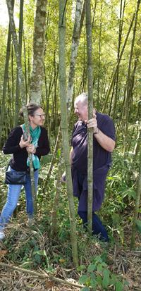 Bambuswald-Portrat-klein
