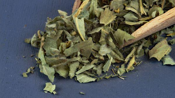 Frauenmantel-Tee Bio