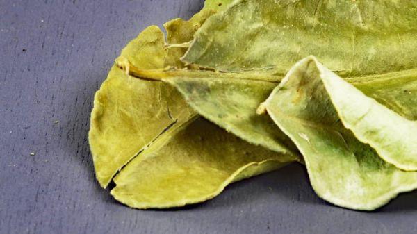 Kaffir-Limettenblätter (Kaffern-Limettenblätter)