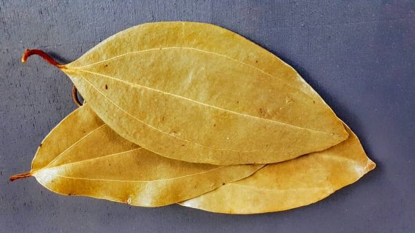 Zimtblätter, Sri Lanka, Indischer Lorbeer,