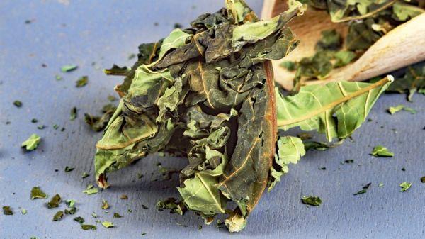 Papaya Blätter Tee aus Vietnam